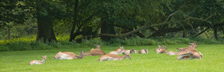 Wildpark Grafenberger Wald